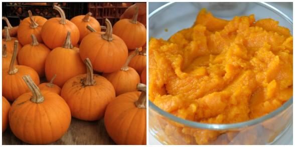 pumpkin love | pamela salzman